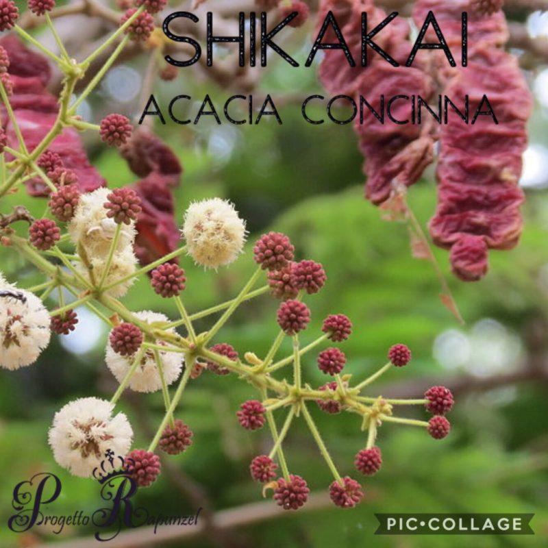 SHIKAKAI (Acacia Concinna)