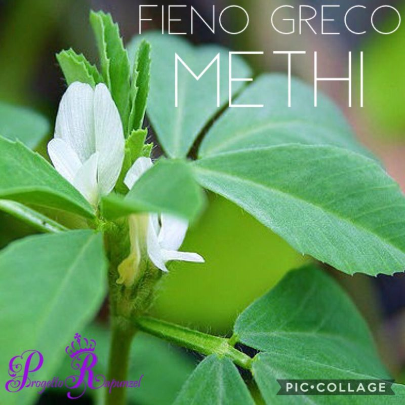 FIENO GRECO (Methi)