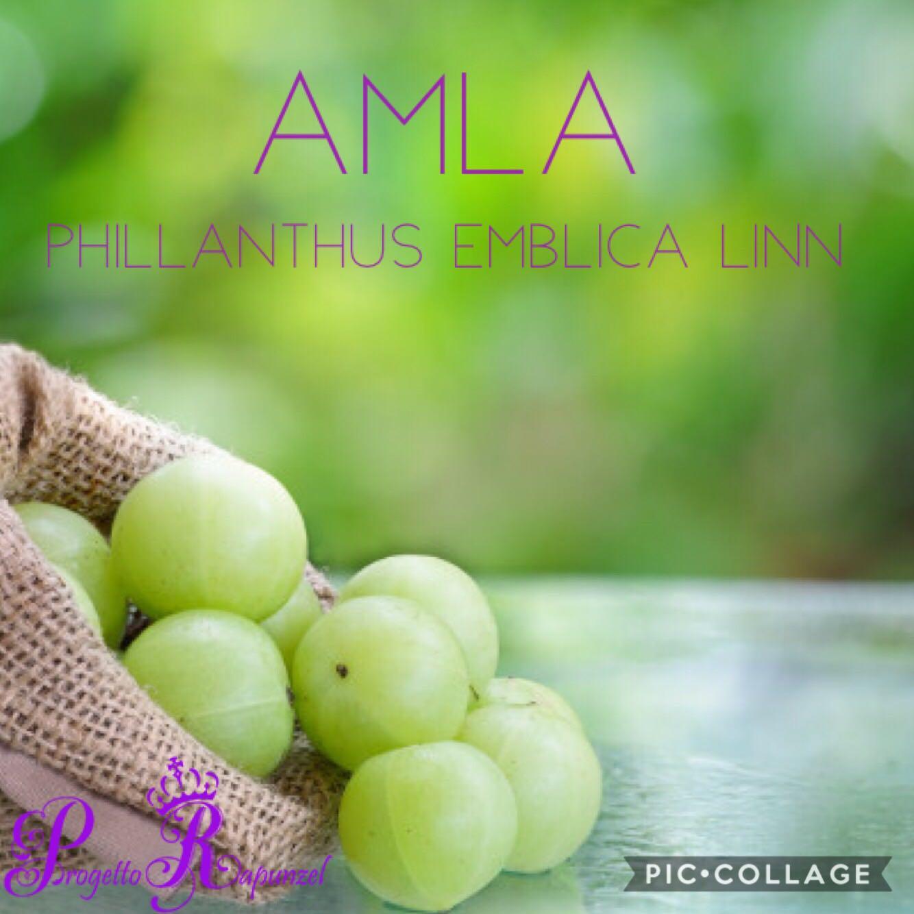 AMLA(PHYLLANTHUS EMBLICA)
