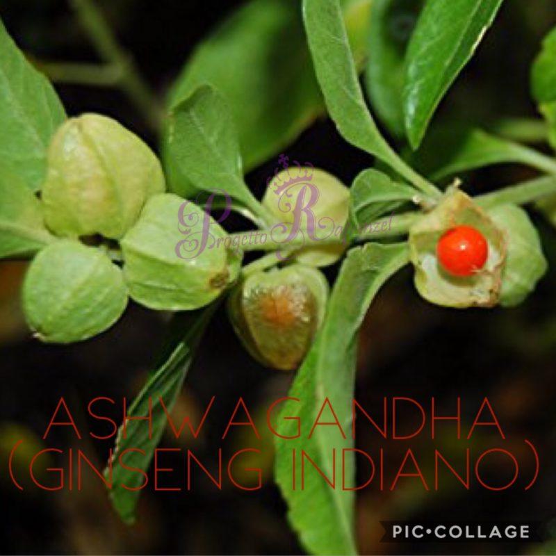 Ashwagandha – Ginseng indiano