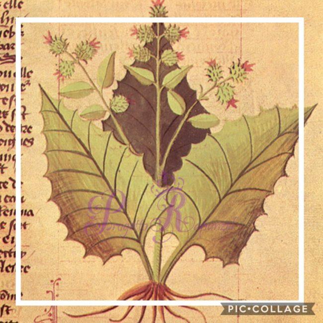Ashwagandha (Ginseng indiano)