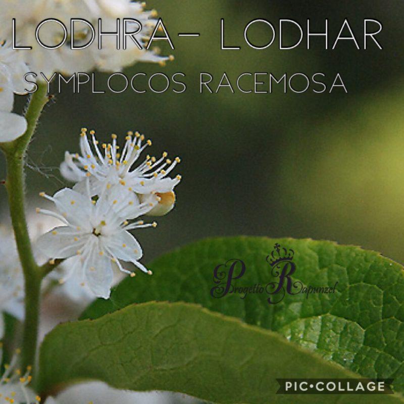 LODHRA (LODHAR – SYMPLOCOS RACEMOSA)