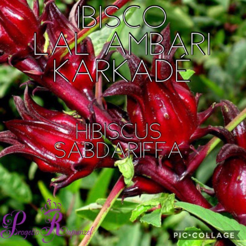 Ibisco – Lal Ambari – Karkadé
