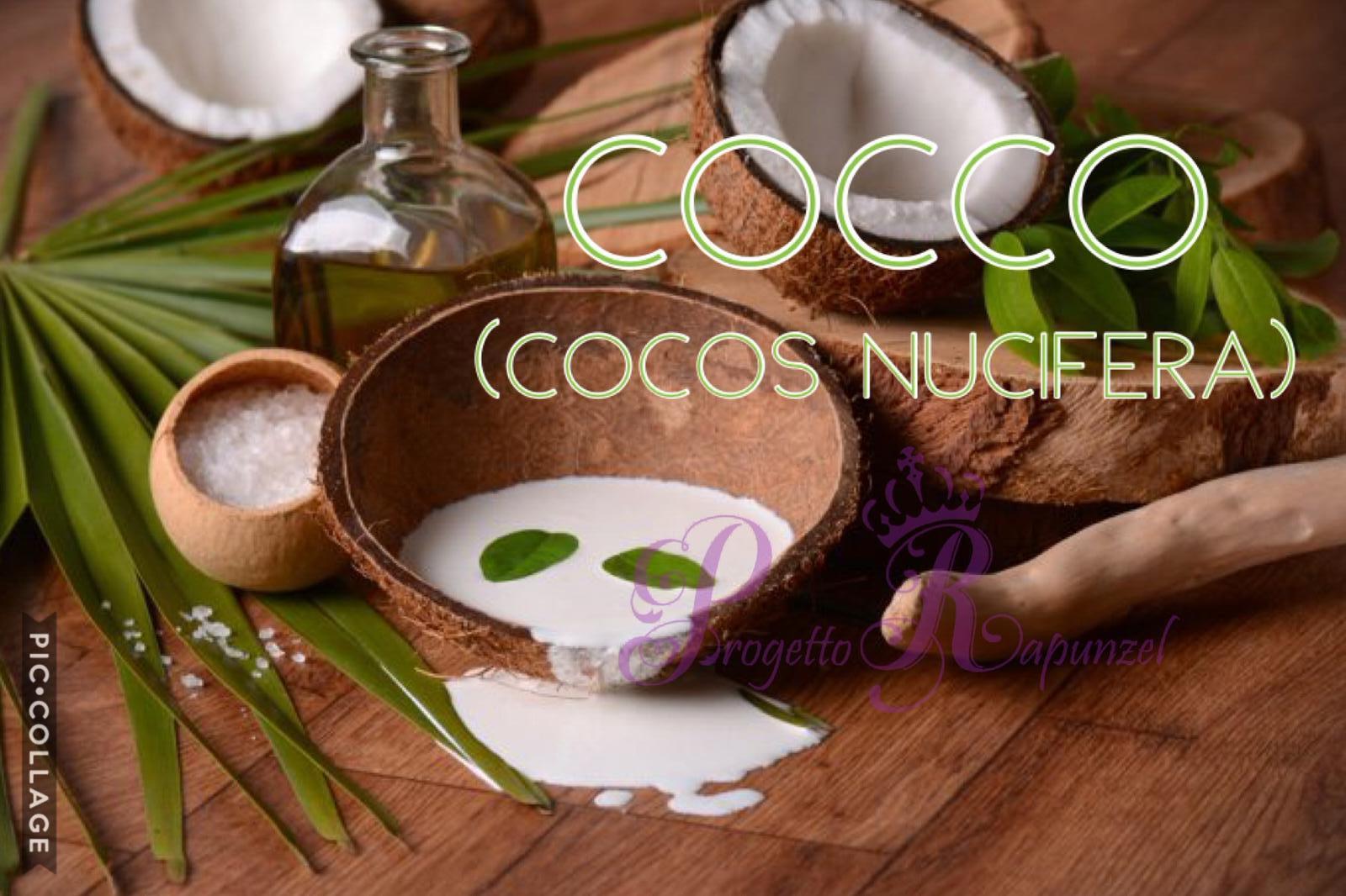 Cocco (Cocos Nucifera)