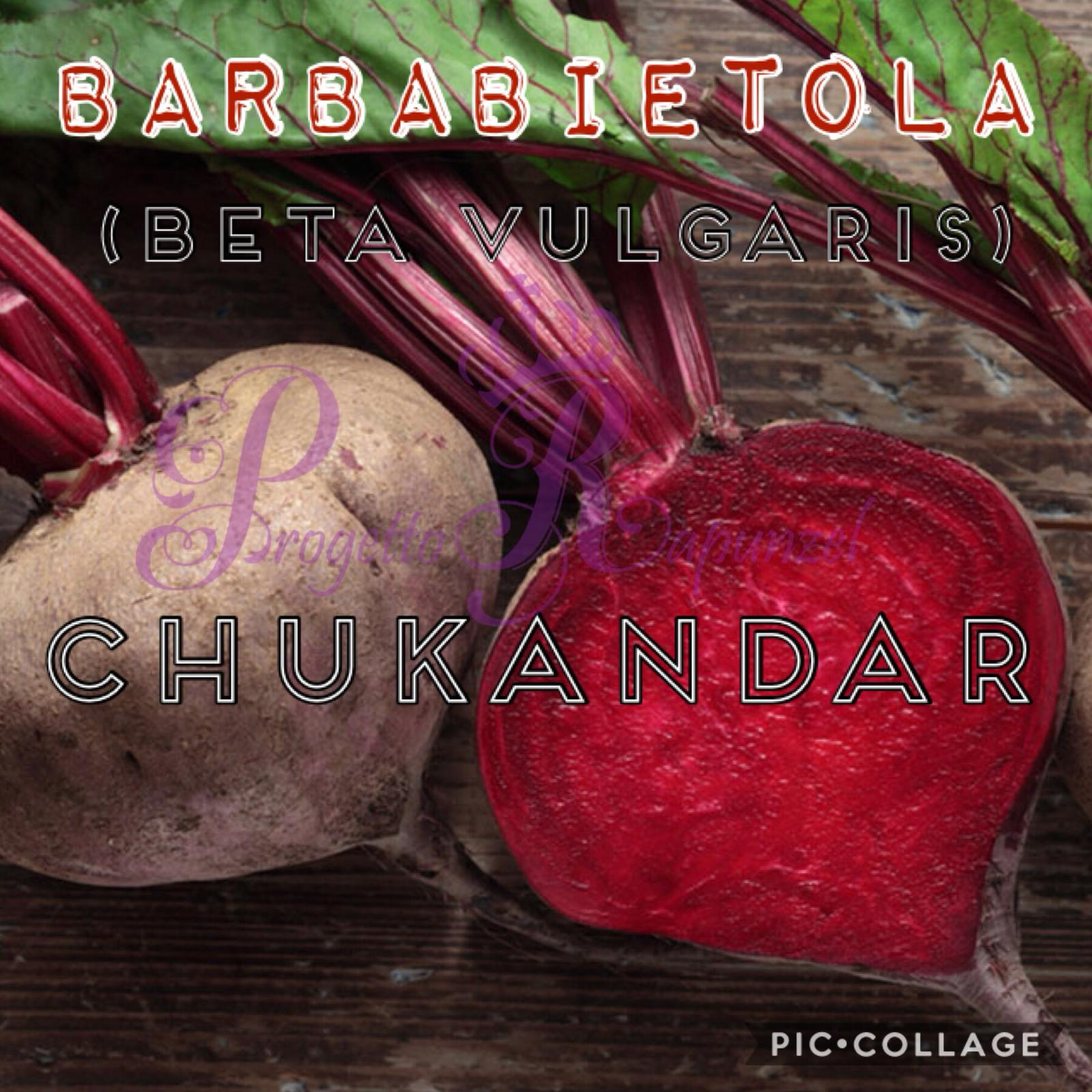 BARBABIETOLA – BETA VULGARIS – CHUKANDAR