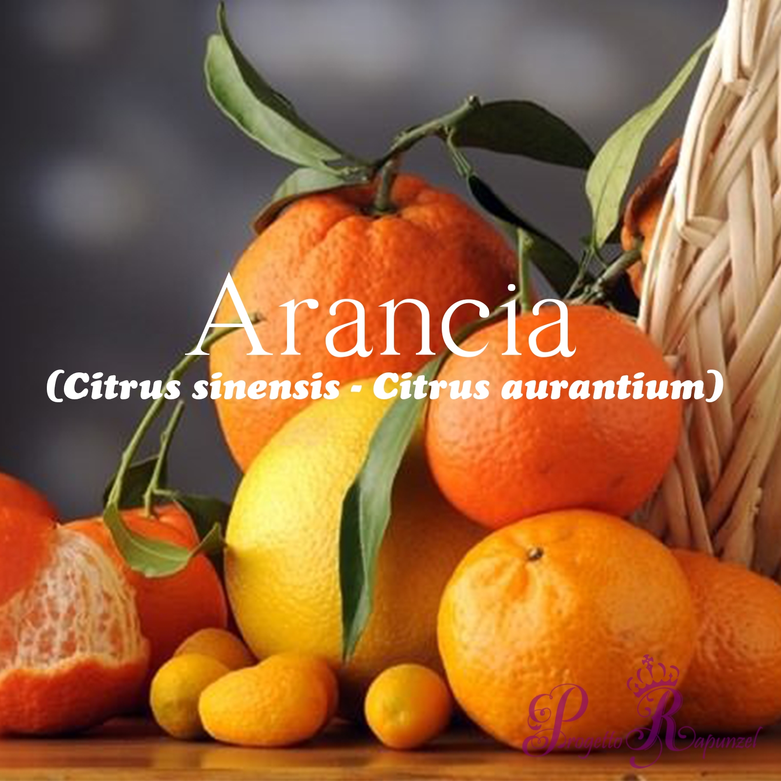 Arancia (Citrus sinensis – Citrus aurantium)