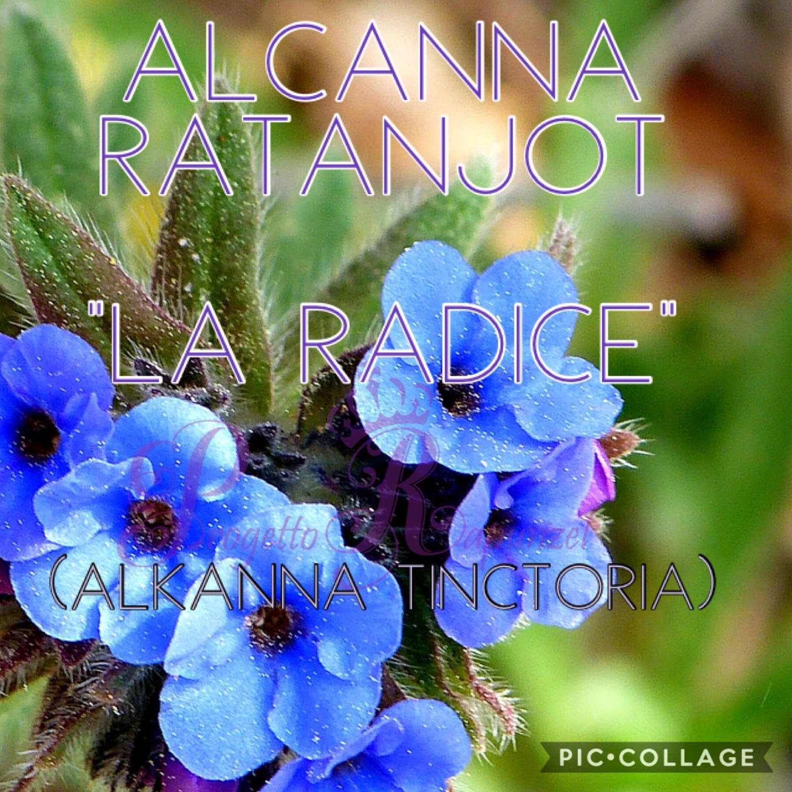 """ALCANNA – RATANJOT """" LA RADICE"""""""