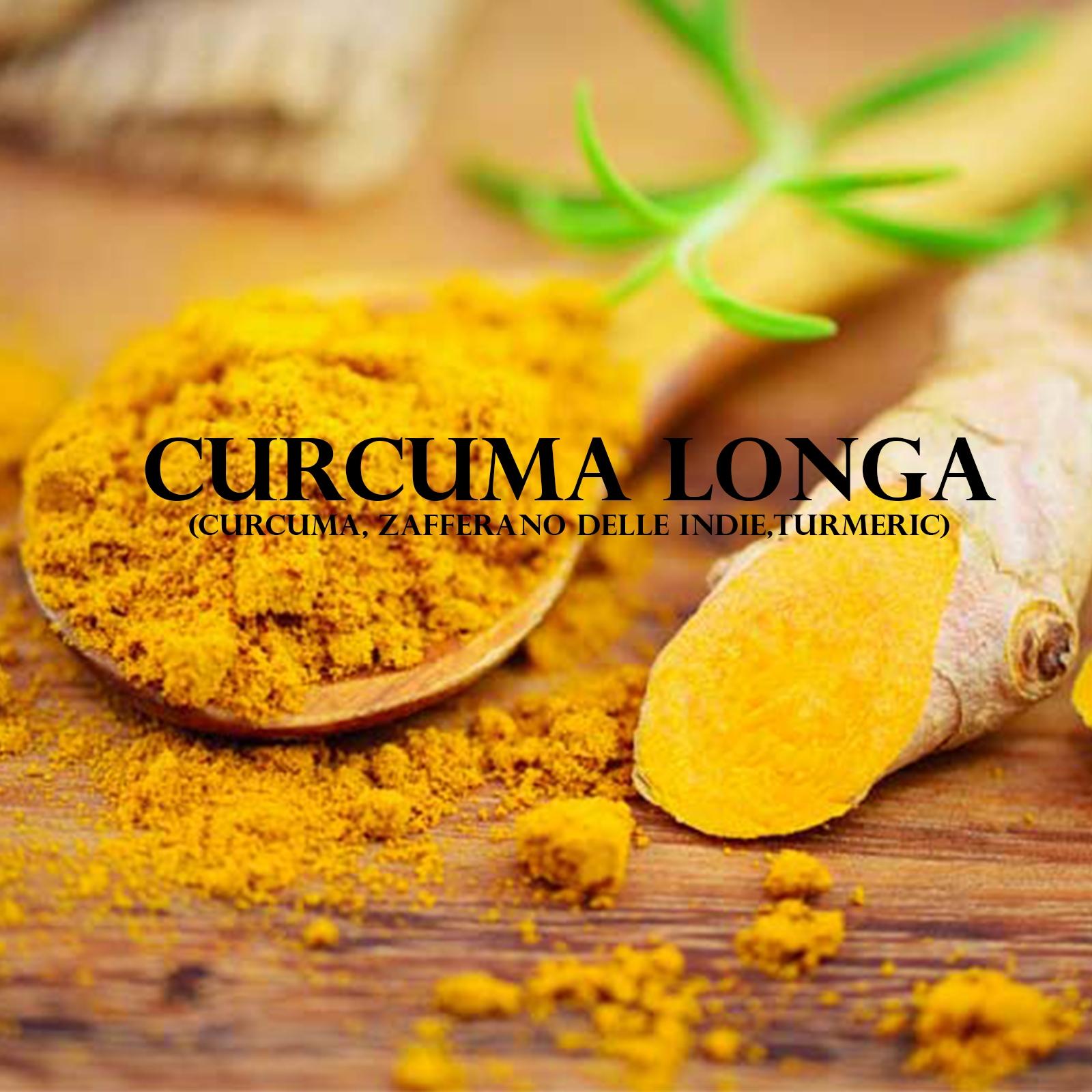 Curcuma Longa (Curcuma, Zafferano delle Indie,Turmeric)