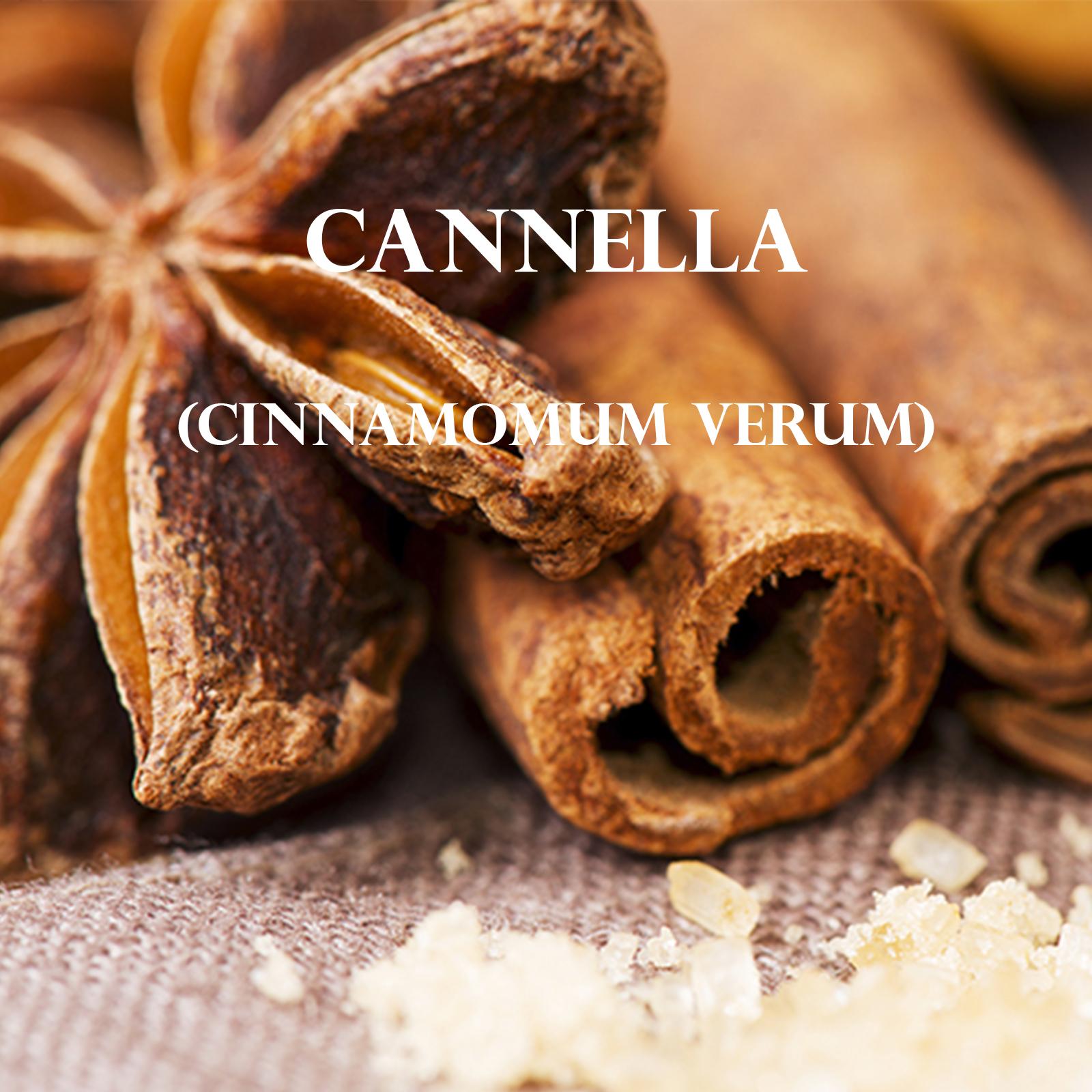 Cannella (Cinnamomum Verum)
