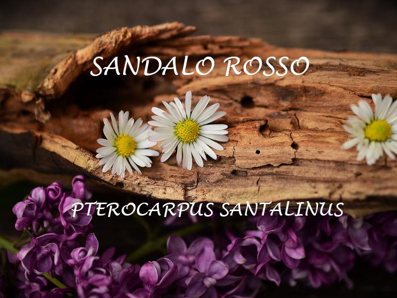 SANDALO ROSSO (PTEROCARPUS SANTALINUS)