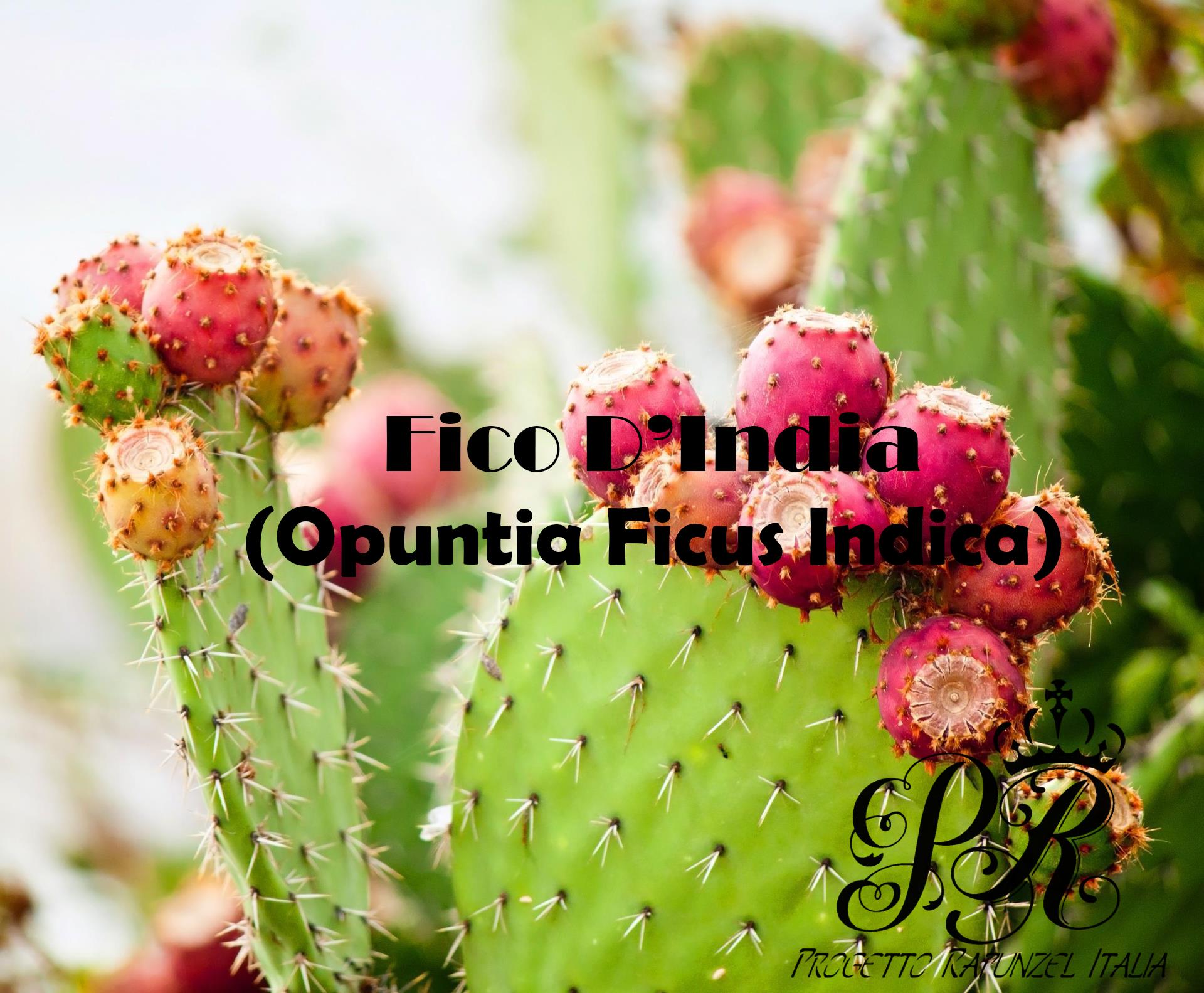 Fico D'india (Opuntia Ficus Indica)