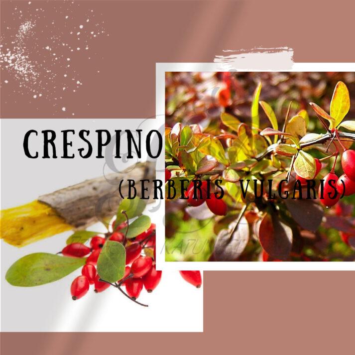 Crespino (Berberis Vulgaris)